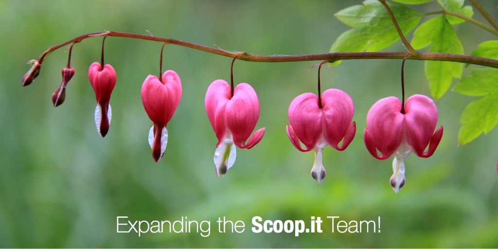 Expanding the Scoop.it Team!