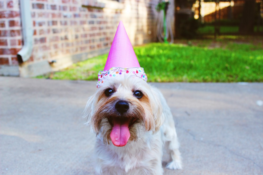 8 steps to take your business to the next level happy dog