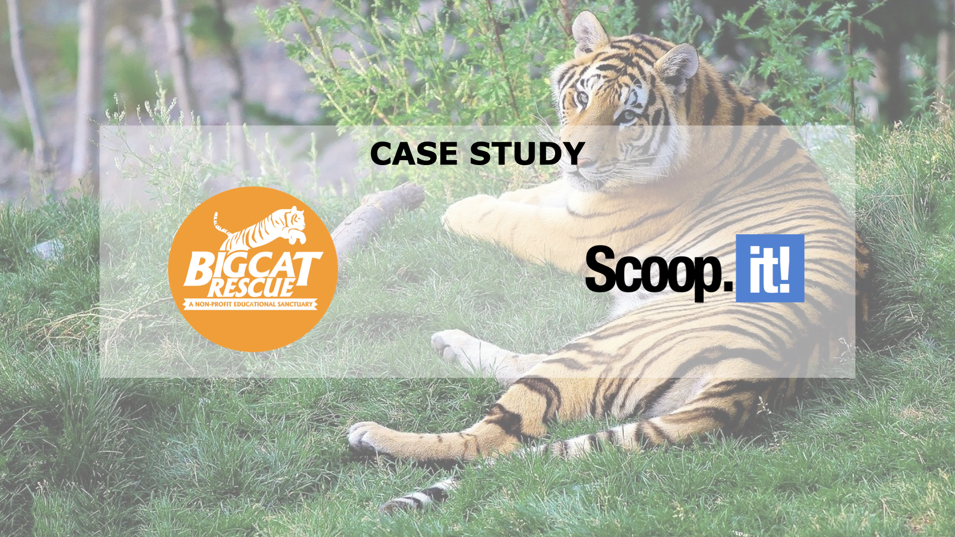 [Use Case] Big Cat Rescue & Scoop.it: How content contributes to animal protection