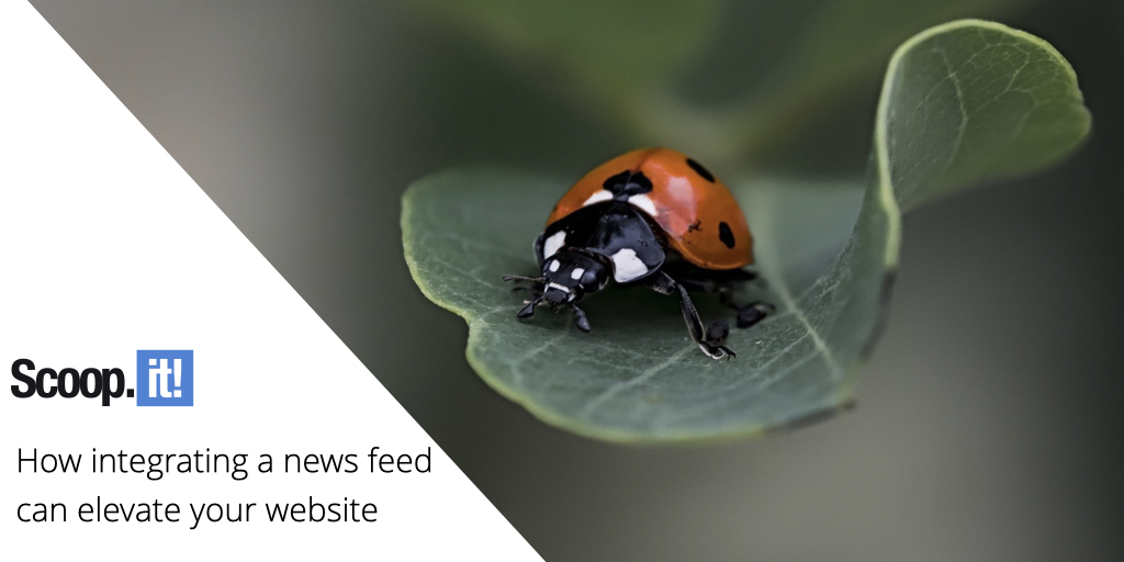 How Integrating a News Feed Can Elevate Your Website