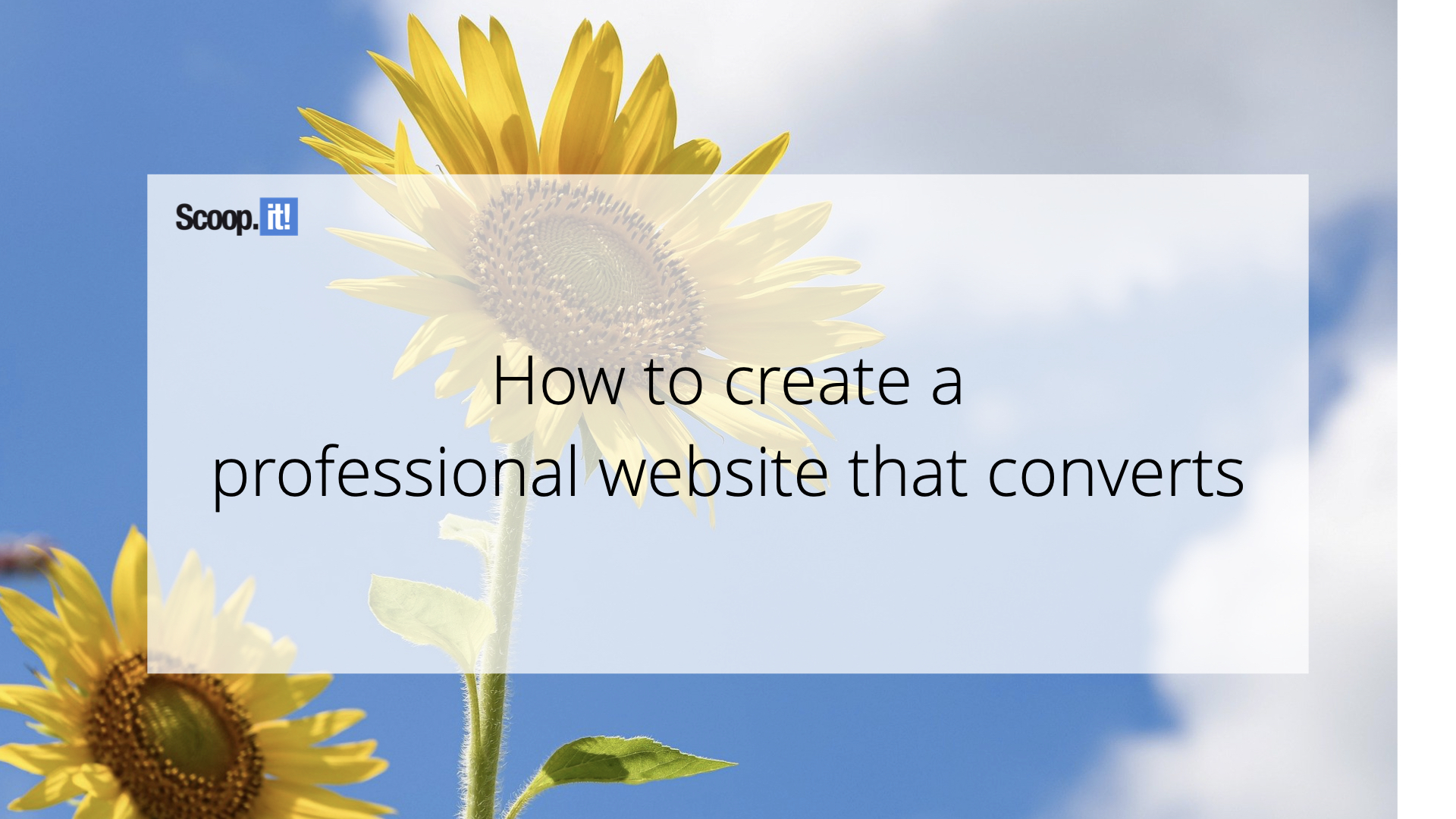 How to Create a Professional Website that Converts
